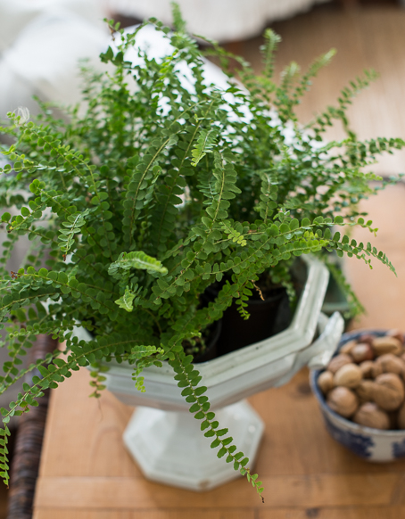 Featured image for Indoor Greenery