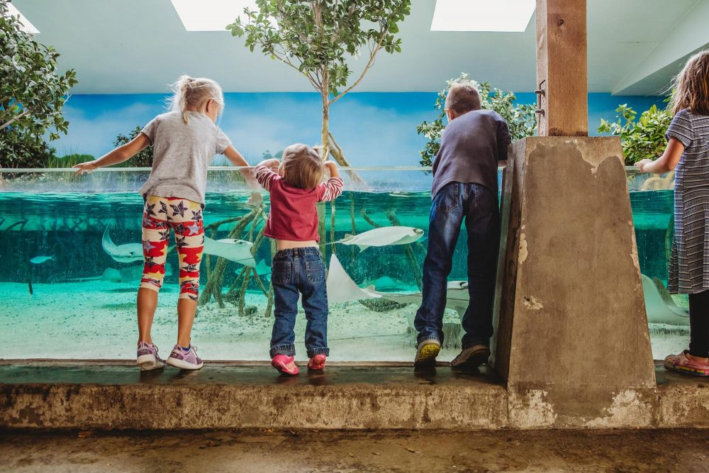 Featured image for Fort Wayne Children's Zoo Opened for Season