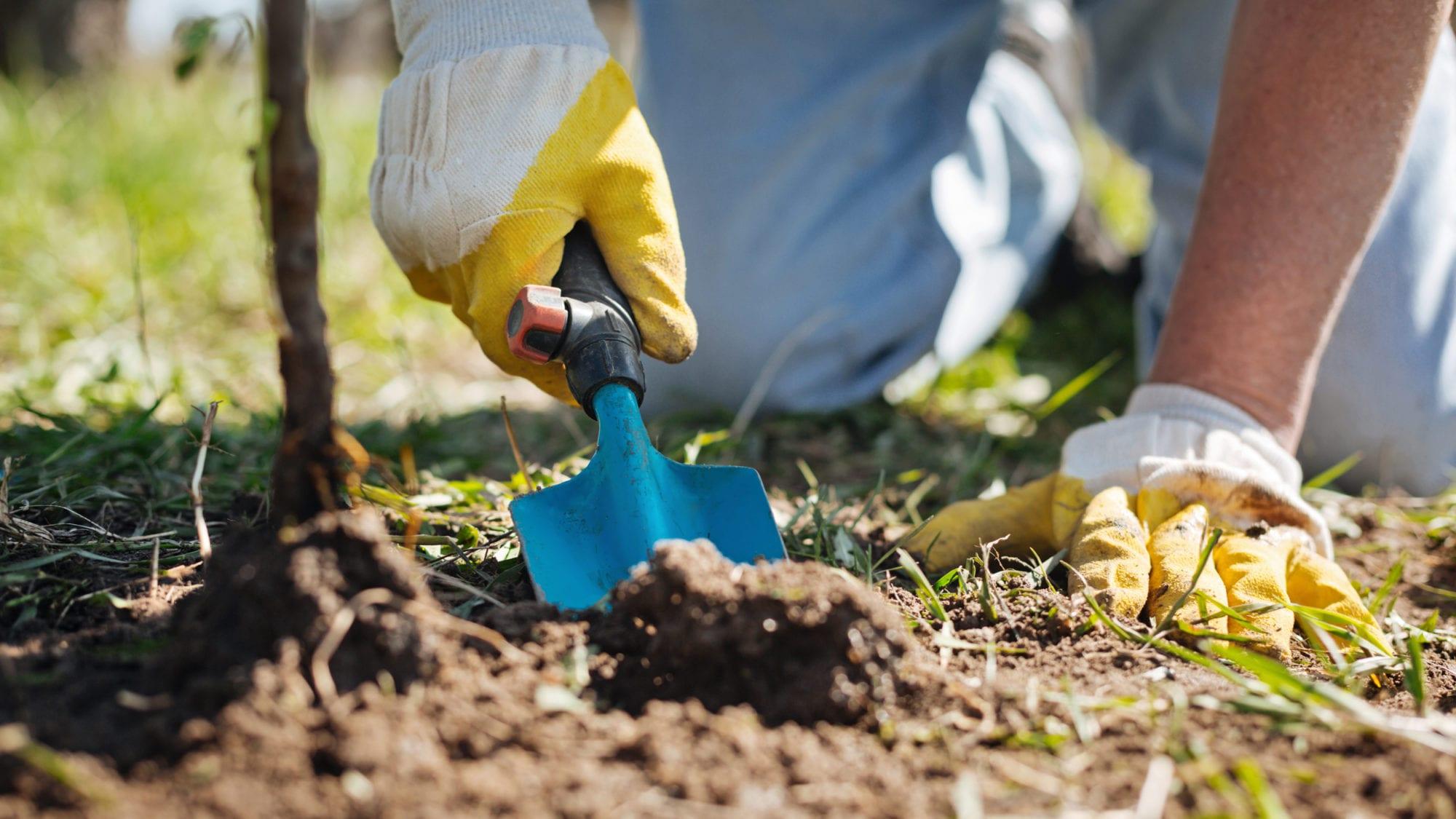 Gardener using spade in dirt.