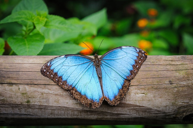 Featured image for Community Feature: Live Butterfly Exhibit at the Botanical Conservatory!